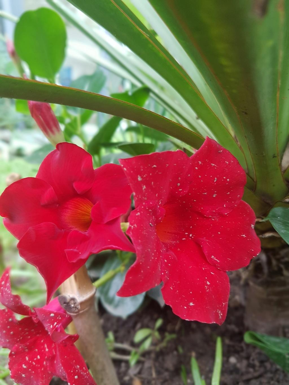Rémi - Mon (tout) petit jardin en mode tropical - Page 7 20180624