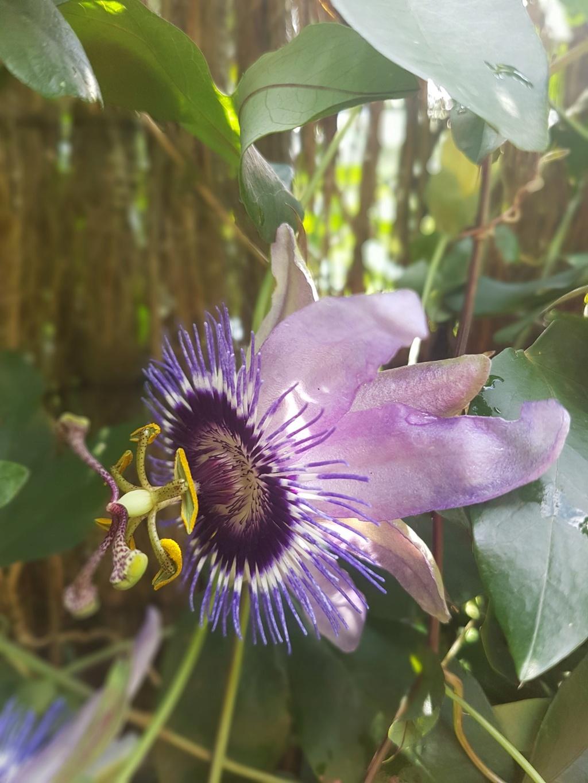 Rémi - Mon (tout) petit jardin en mode tropical - Page 7 20180627