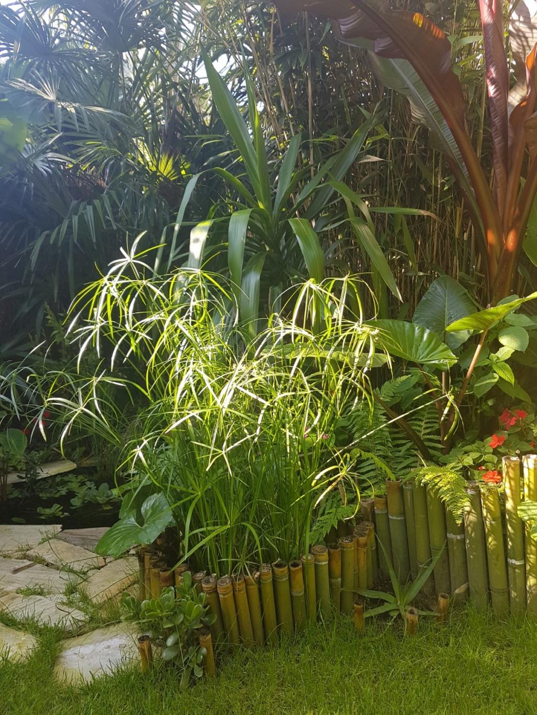 Rémi - Mon (tout) petit jardin en mode tropical - Page 8 20180653