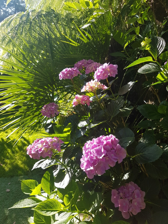 Rémi - Mon (tout) petit jardin en mode tropical - Page 8 20180655