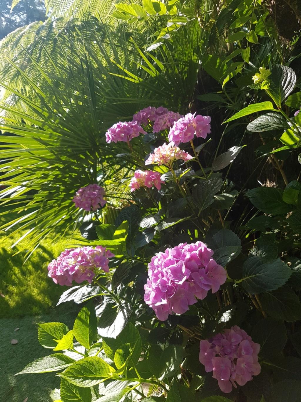 Mon (tout) petit jardin en mode tropical - Page 8 20180655