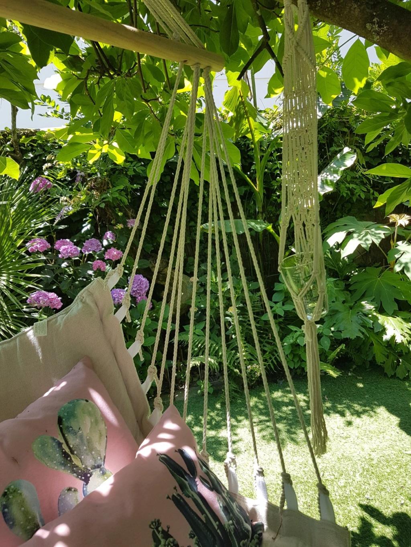 Rémi - Mon (tout) petit jardin en mode tropical - Page 8 20180664
