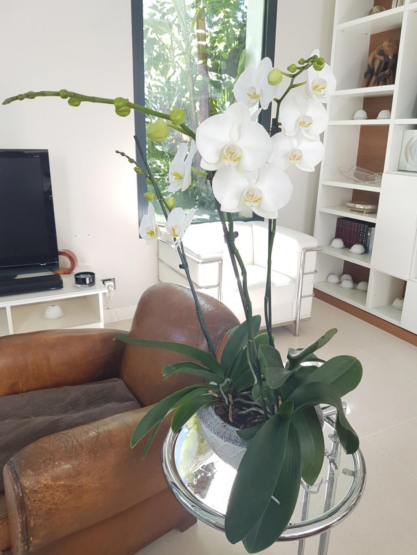 orchidées - floraisons du moment 2018 - Page 3 20180692