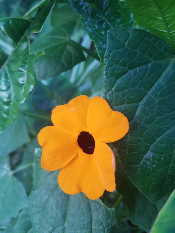 Mon (tout) petit jardin en mode tropical - Page 8 20180699