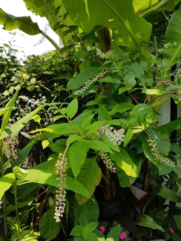 Mon (tout) petit jardin en mode tropical - Page 8 20180784