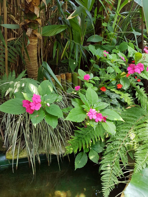 Mon (tout) petit jardin en mode tropical - Page 8 20180785