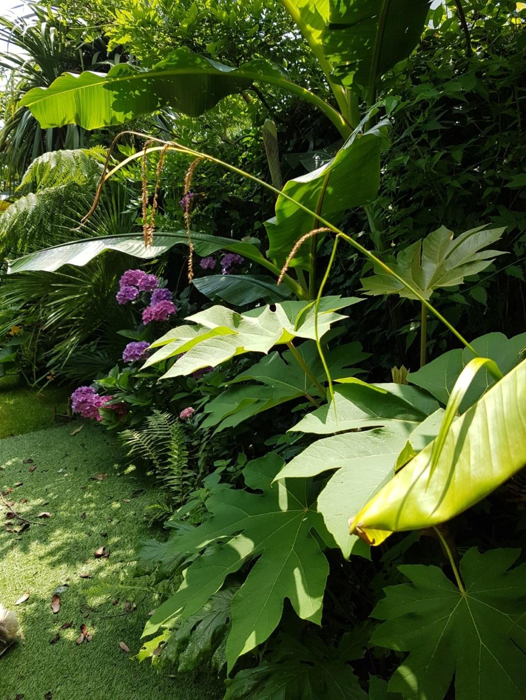 Mon (tout) petit jardin en mode tropical - Page 8 20180786