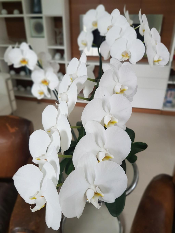orchidées - floraisons du moment 2018 - Page 4 20180840