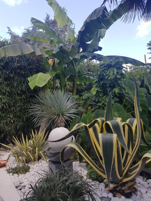 Rémi - Mon (tout) petit jardin en mode tropical - Page 9 20180847