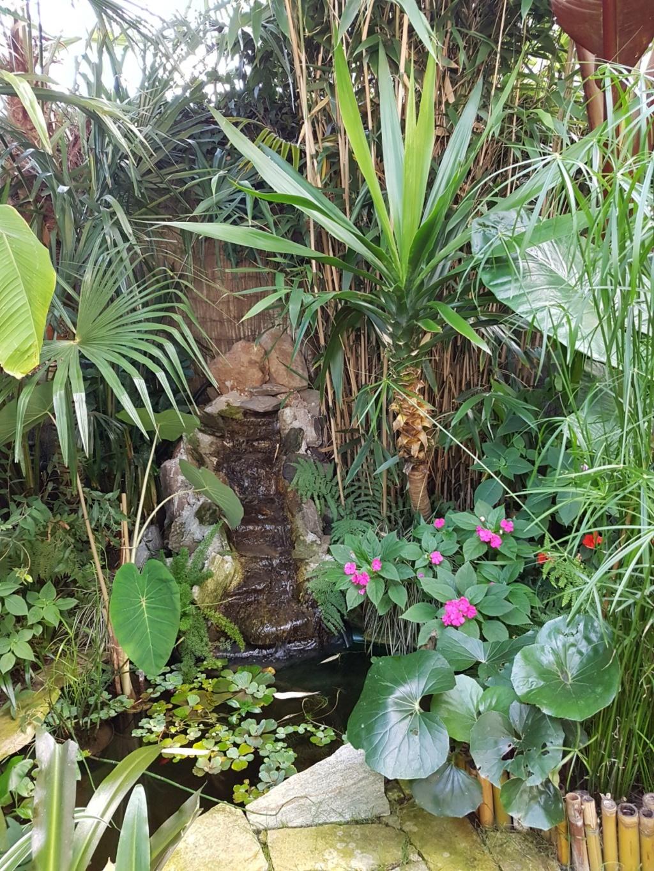 Rémi - Mon (tout) petit jardin en mode tropical - Page 9 20180849