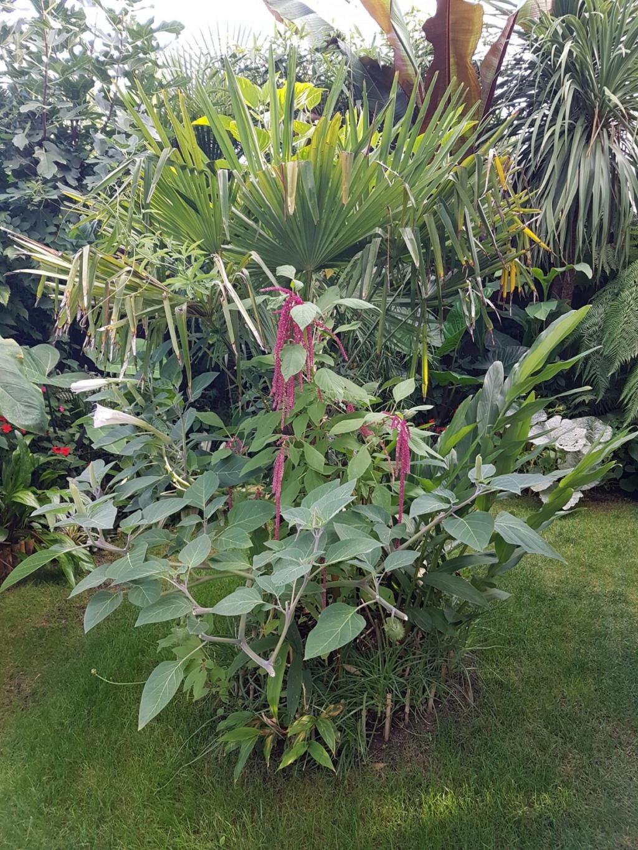 Rémi - Mon (tout) petit jardin en mode tropical - Page 9 20180851