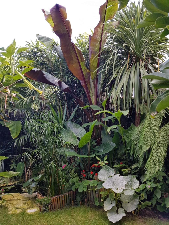 Rémi - Mon (tout) petit jardin en mode tropical - Page 9 20180854