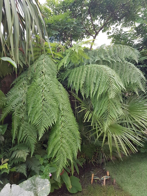 Rémi - Mon (tout) petit jardin en mode tropical - Page 9 20180855