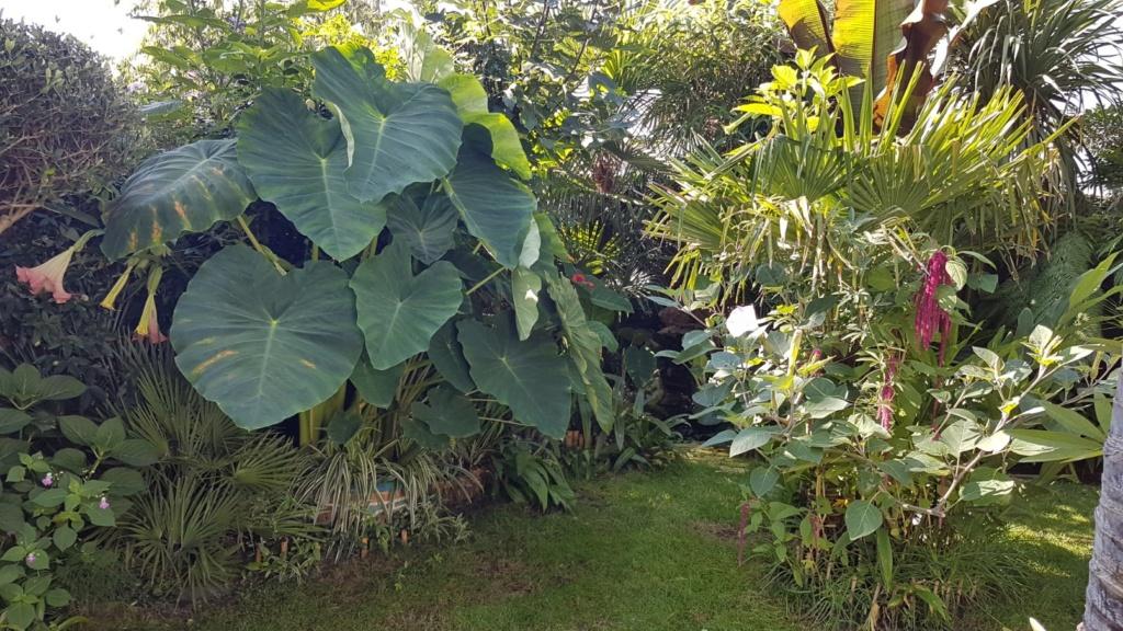 Rémi - Mon (tout) petit jardin en mode tropical - Page 9 20180936