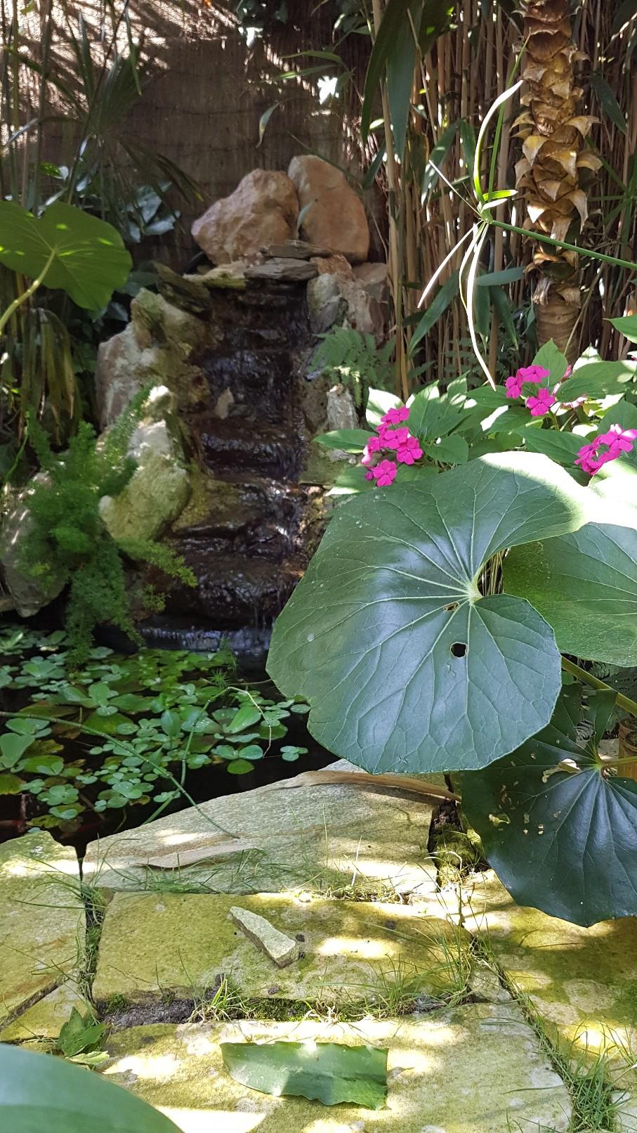 Rémi - Mon (tout) petit jardin en mode tropical - Page 9 20180938