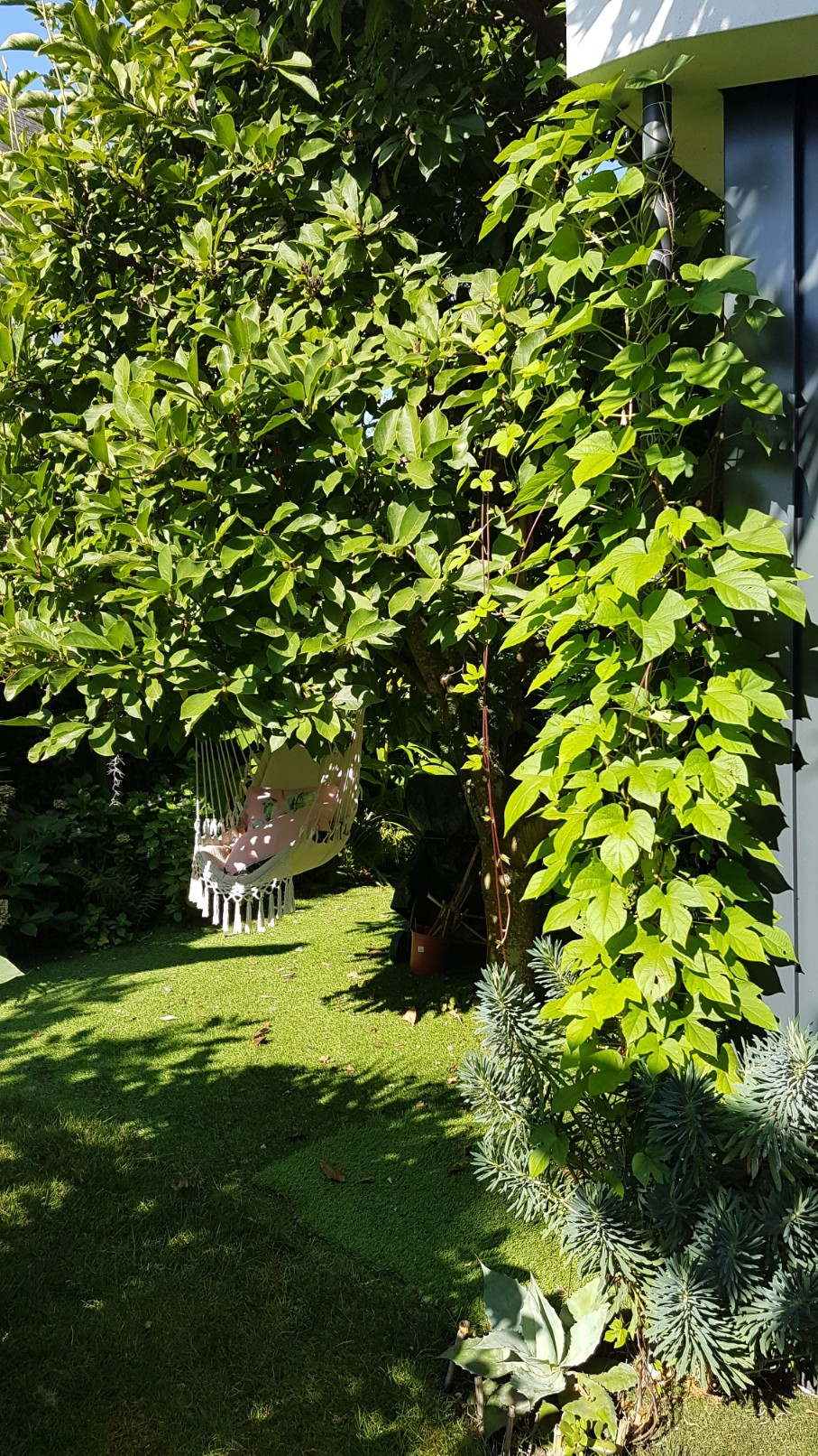 Rémi - Mon (tout) petit jardin en mode tropical - Page 9 20180939