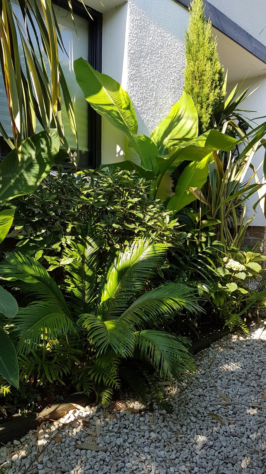 Rémi - Mon (tout) petit jardin en mode tropical - Page 9 20180942
