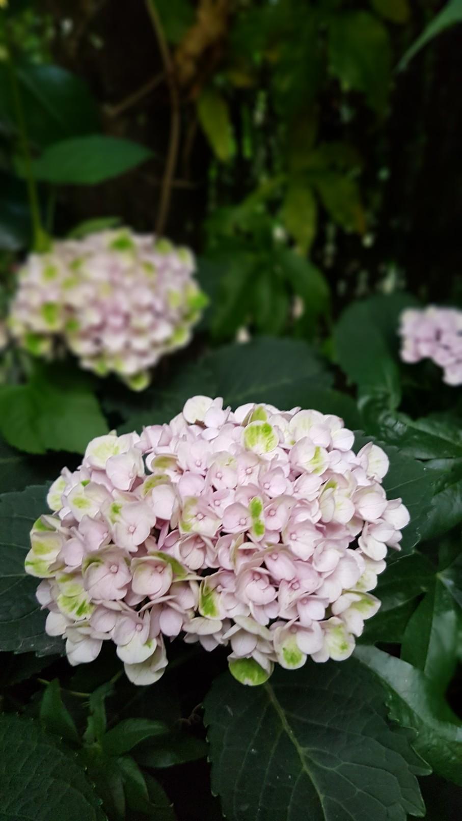 Rémi - Mon (tout) petit jardin en mode tropical - Page 9 20180947