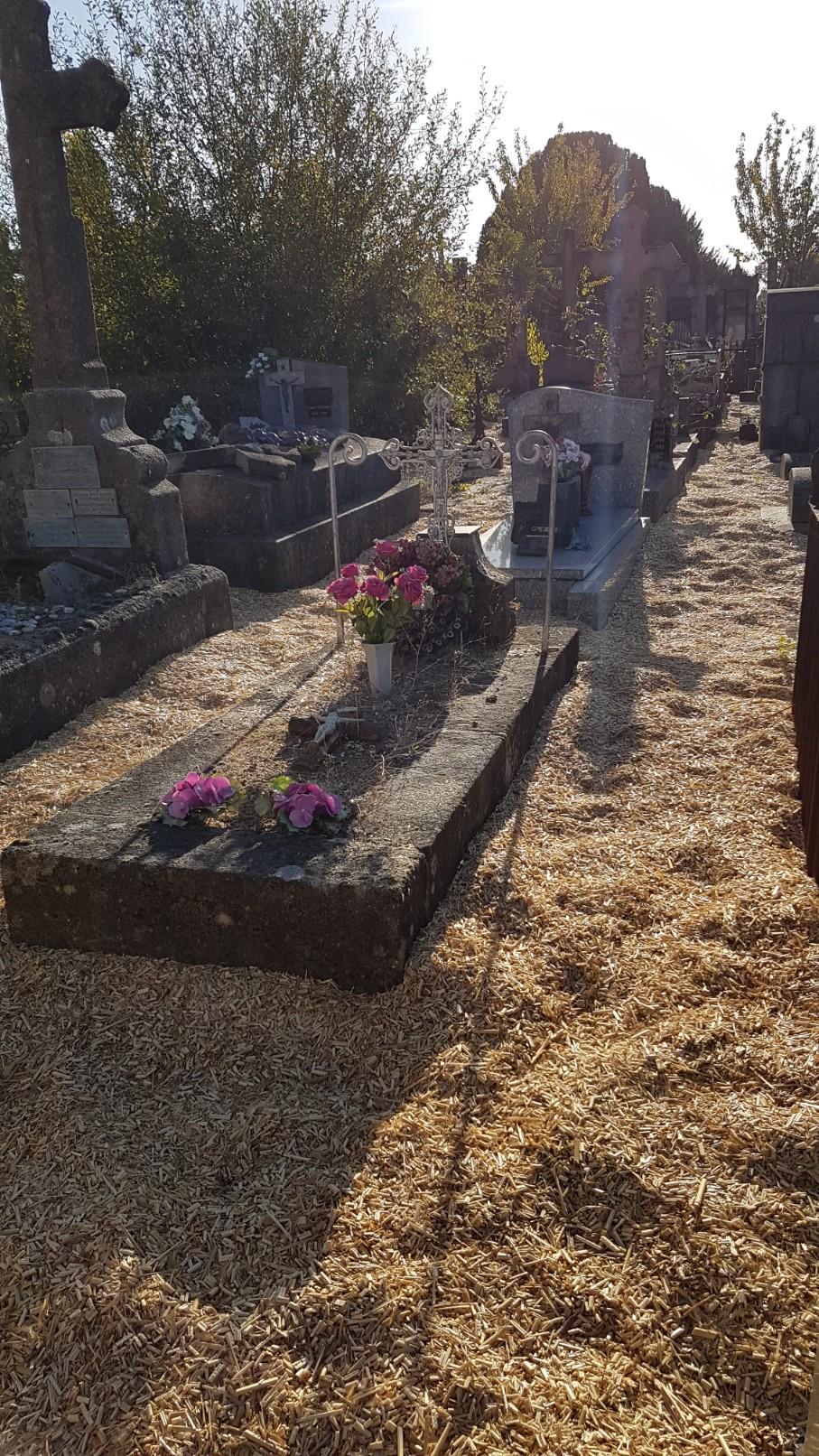 Au pied de mon arbre ... - Les cimetières pleins de vie - Page 2 20181024