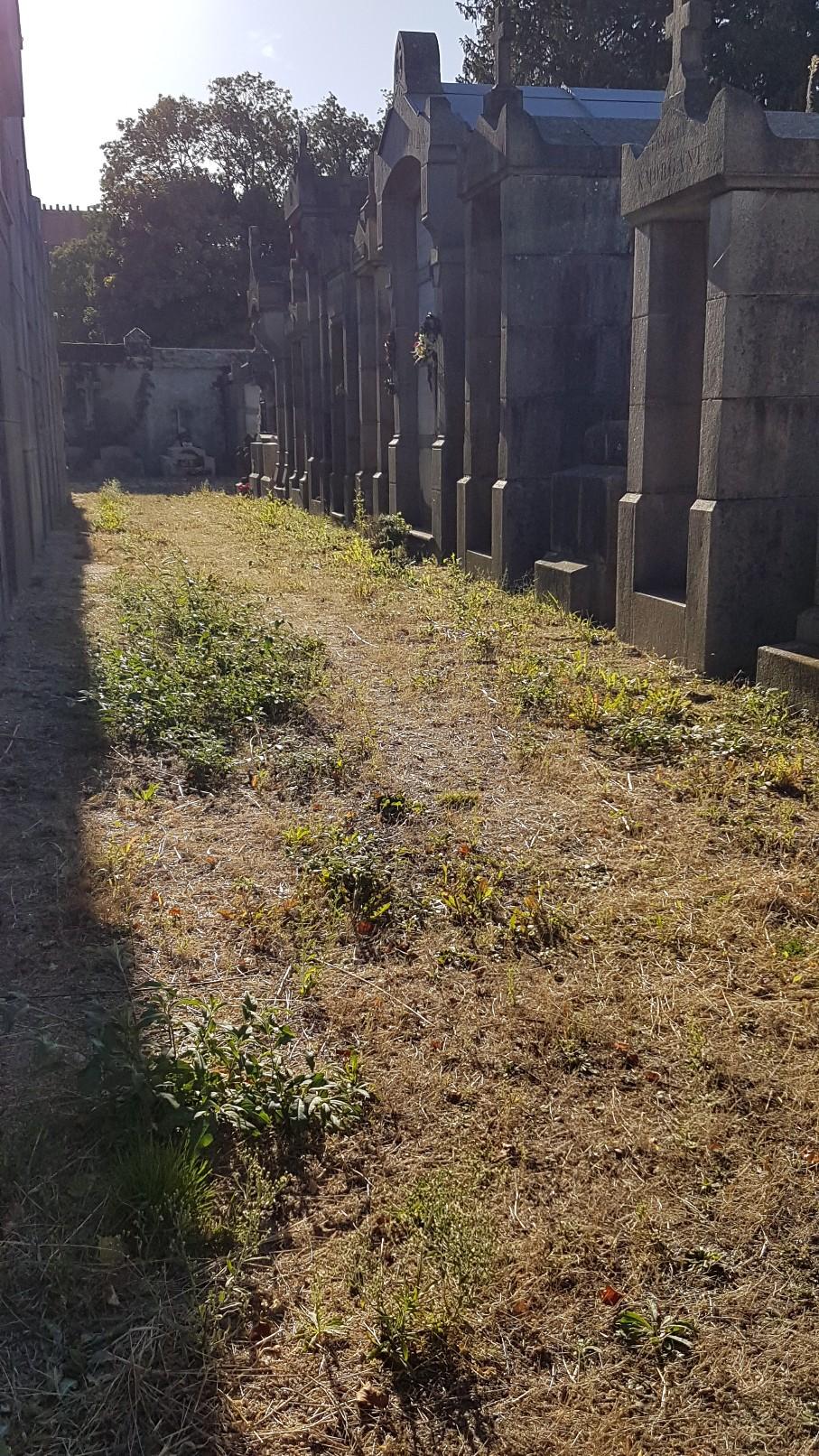 Au pied de mon arbre ... - Les cimetières pleins de vie - Page 2 20181026
