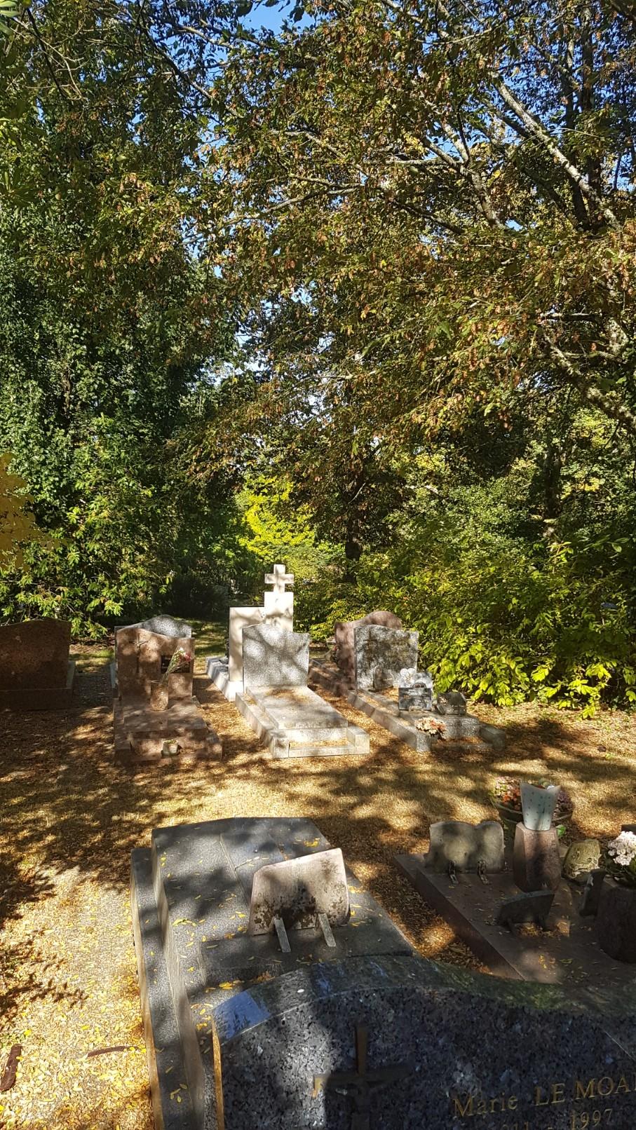 Au pied de mon arbre ... - Les cimetières pleins de vie - Page 2 20181031