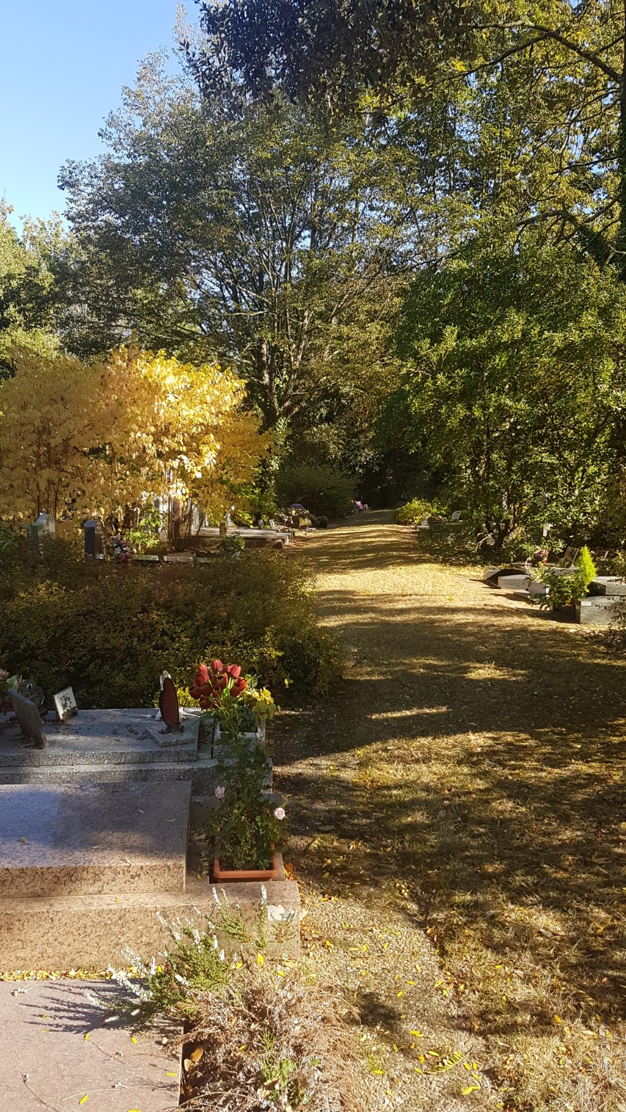 Au pied de mon arbre ... - Les cimetières pleins de vie - Page 2 20181033