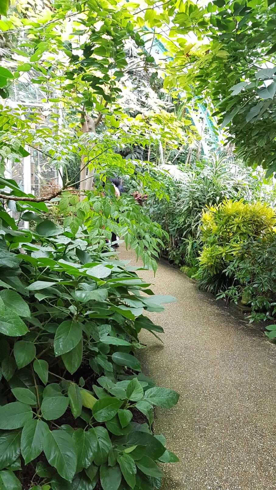 (75) Jardin des serres d'Auteuil - Paris 20181159