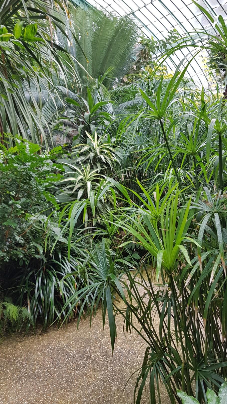 (75) Jardin des serres d'Auteuil - Paris 20181162