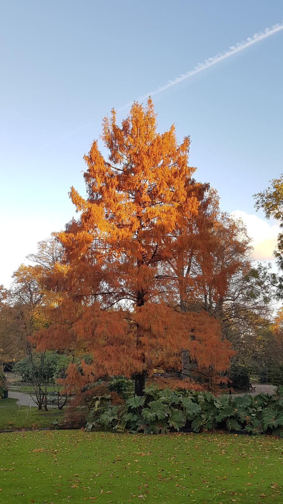 Couleurs d'automne - 2018 20181222
