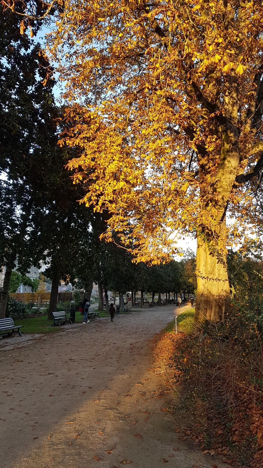 Couleurs d'automne - 2018 20181223