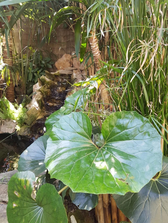 Rémi - Mon (tout) petit jardin en mode tropical - Page 11 20190106