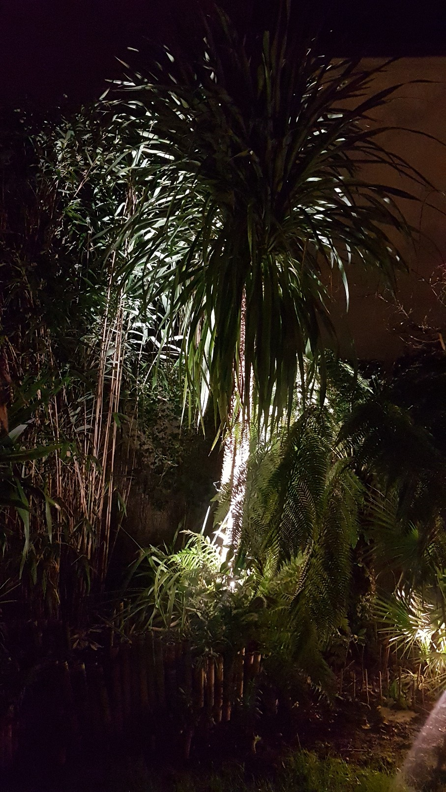 Rémi - Mon (tout) petit jardin en mode tropical - Page 10 20190168