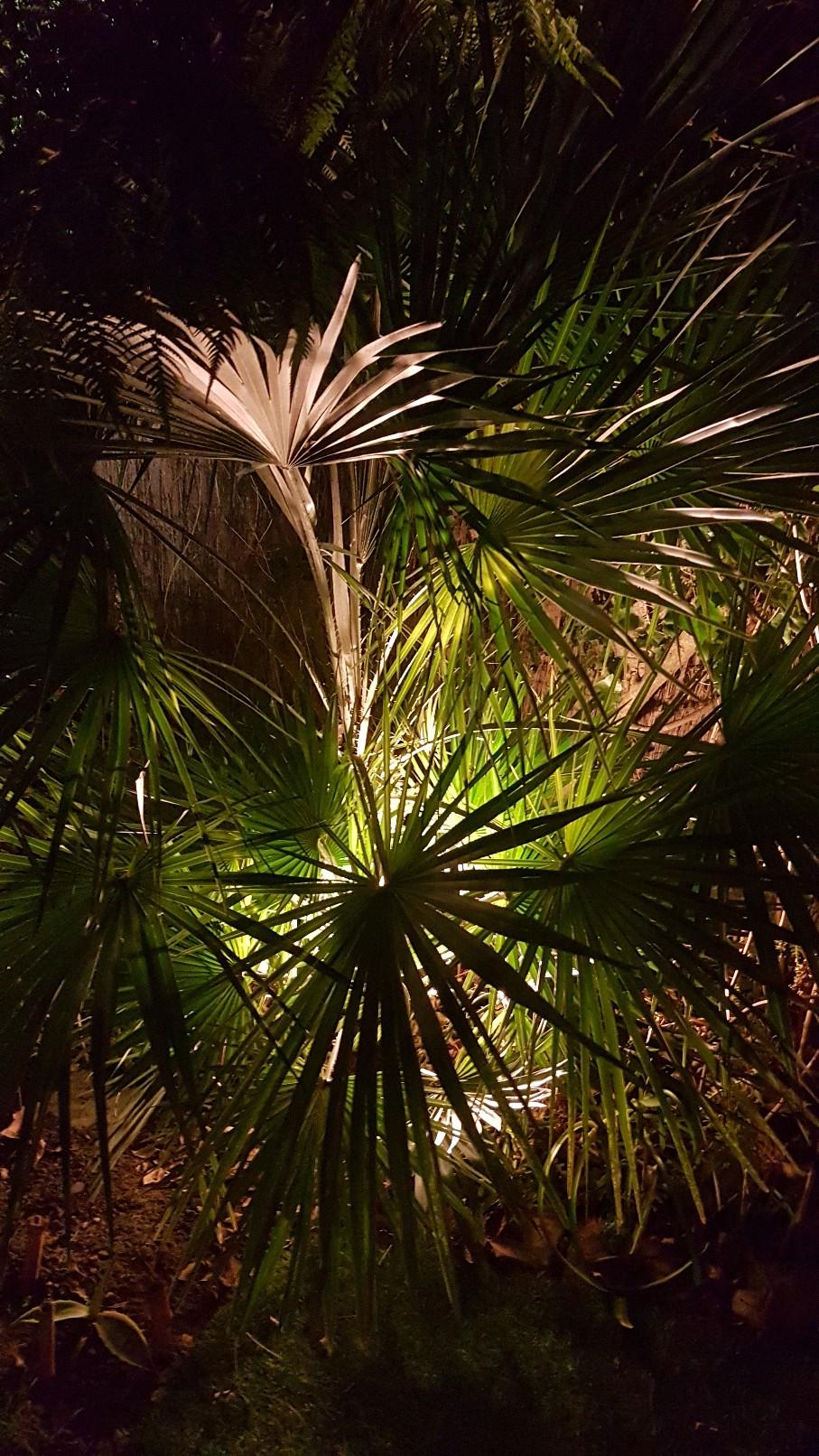 Rémi - Mon (tout) petit jardin en mode tropical - Page 10 20190169
