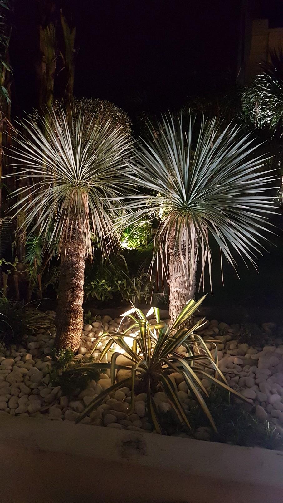Rémi - Mon (tout) petit jardin en mode tropical - Page 10 20190171