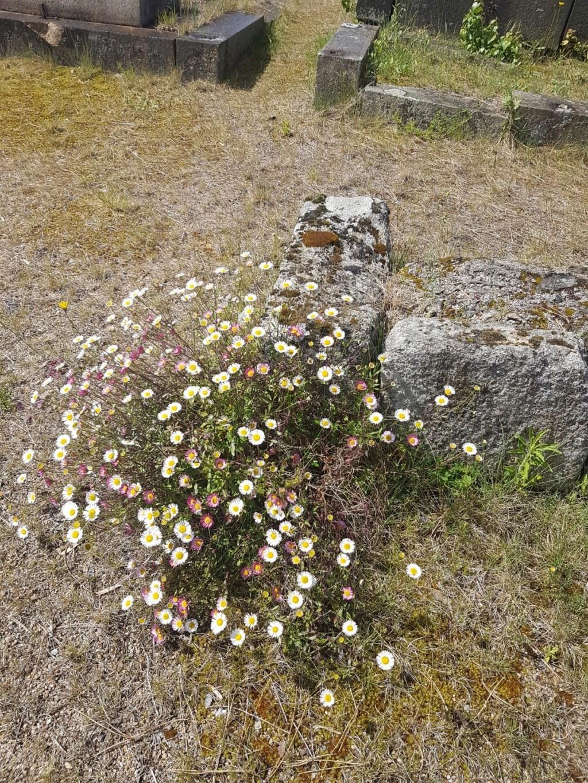 Au pied de mon arbre ... - Les cimetières pleins de vie - Page 2 20190295