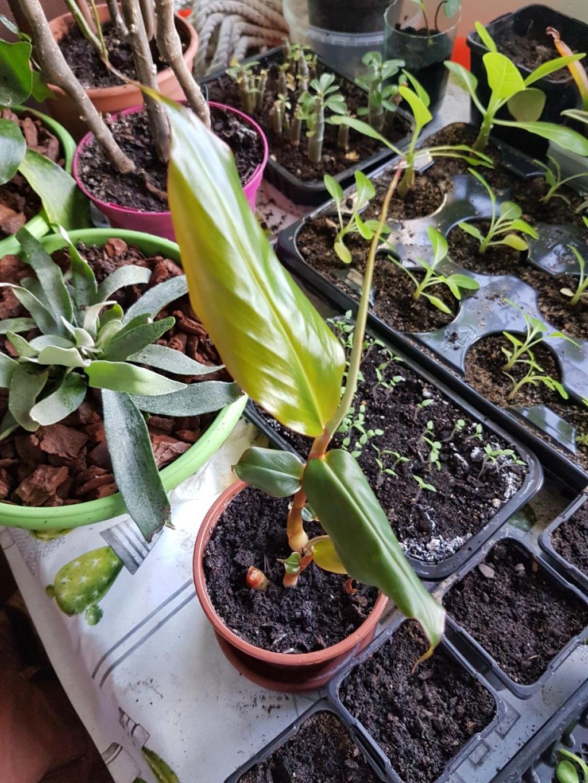 Rémi - Mon (tout) petit jardin en mode tropical - Page 10 20190321