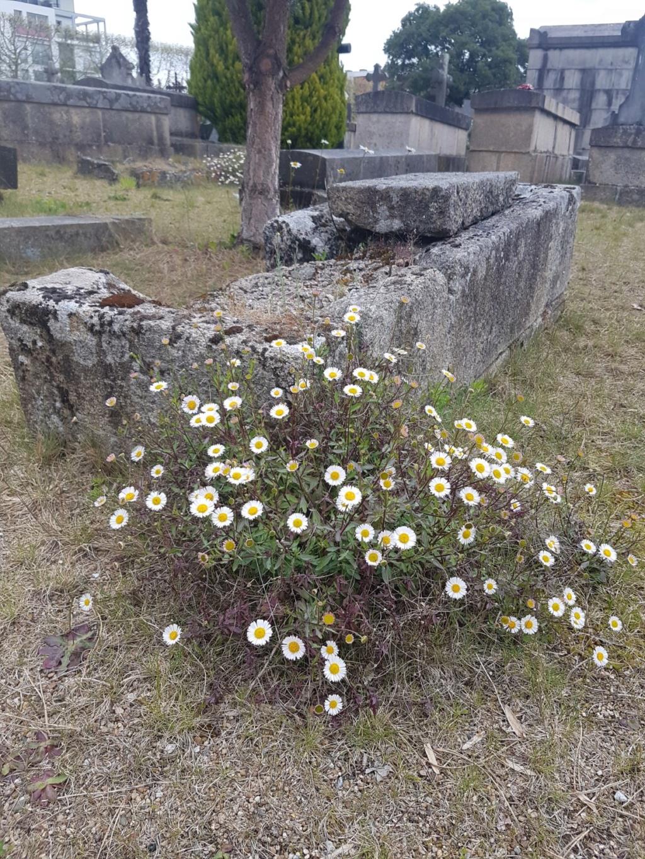 Au pied de mon arbre ... - Les cimetières pleins de vie - Page 2 20190448