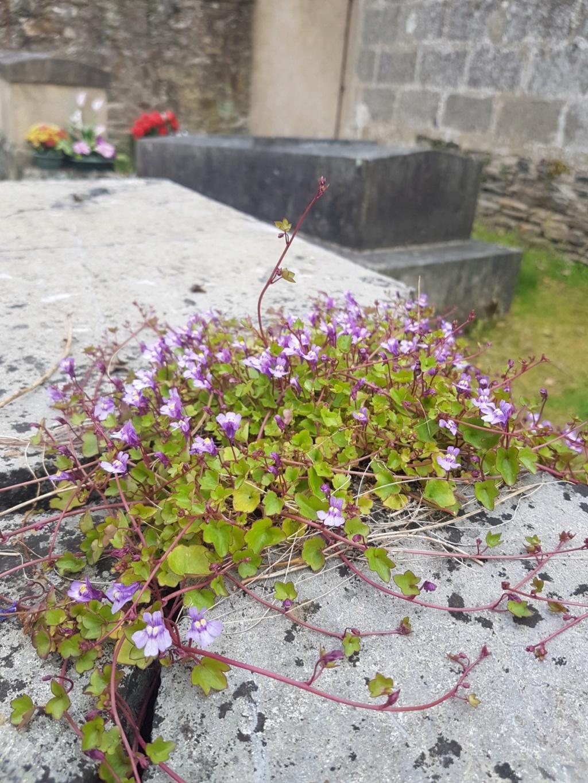 Au pied de mon arbre ... - Les cimetières pleins de vie - Page 2 20190450