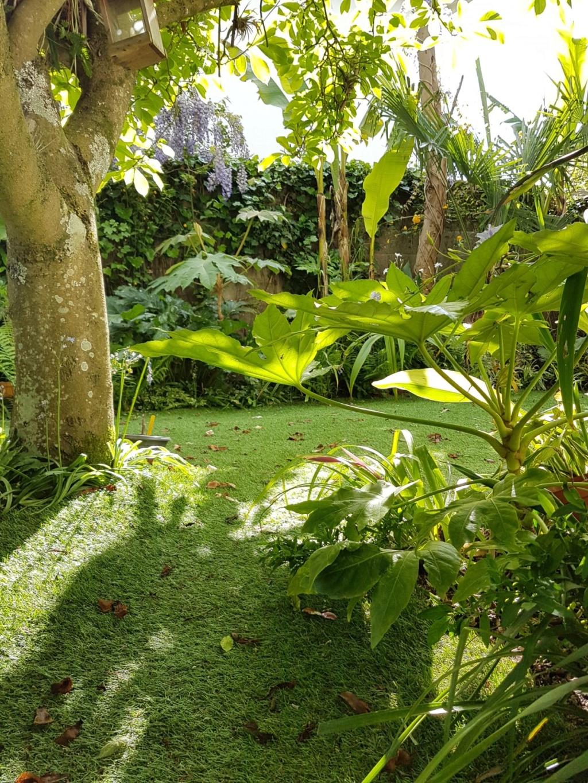 Rémi - Mon (tout) petit jardin en mode tropical - Page 12 20190547