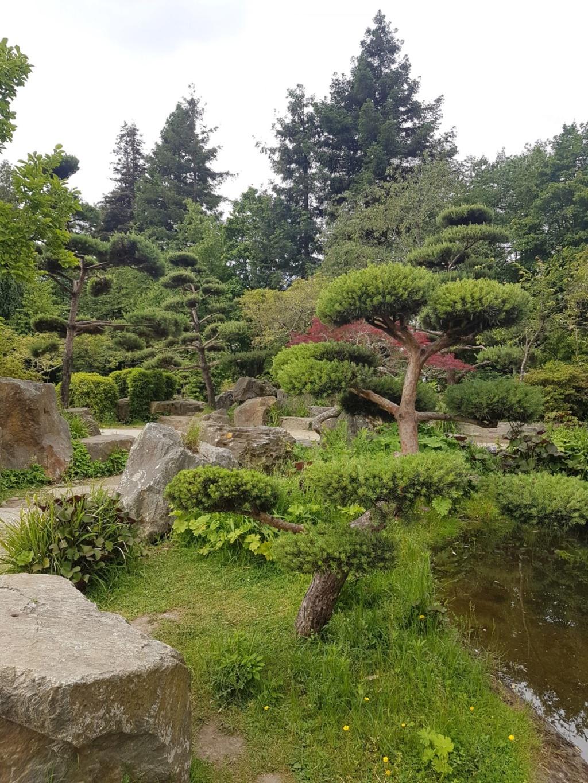 (44) Jardin japonais de l'île de Versailles - Nantes  20190662