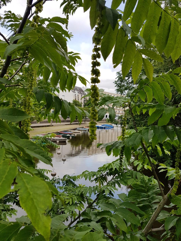 (44) Jardin japonais de l'île de Versailles - Nantes  20190672