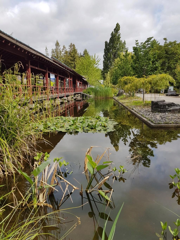 (44) Jardin japonais de l'île de Versailles - Nantes  20190673