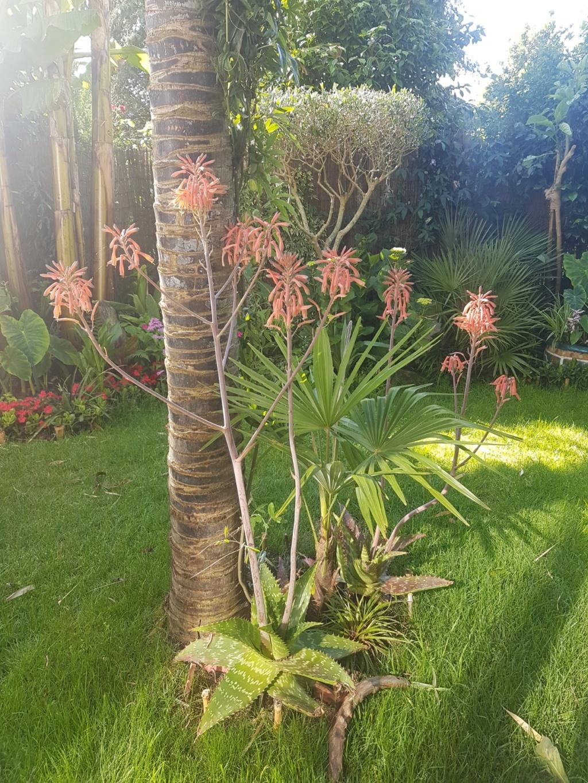 Aloe grandidentata - Page 3 20190706
