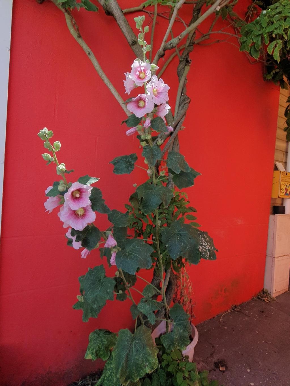 Village jardin exotique de Trentemoult (44) 20190751