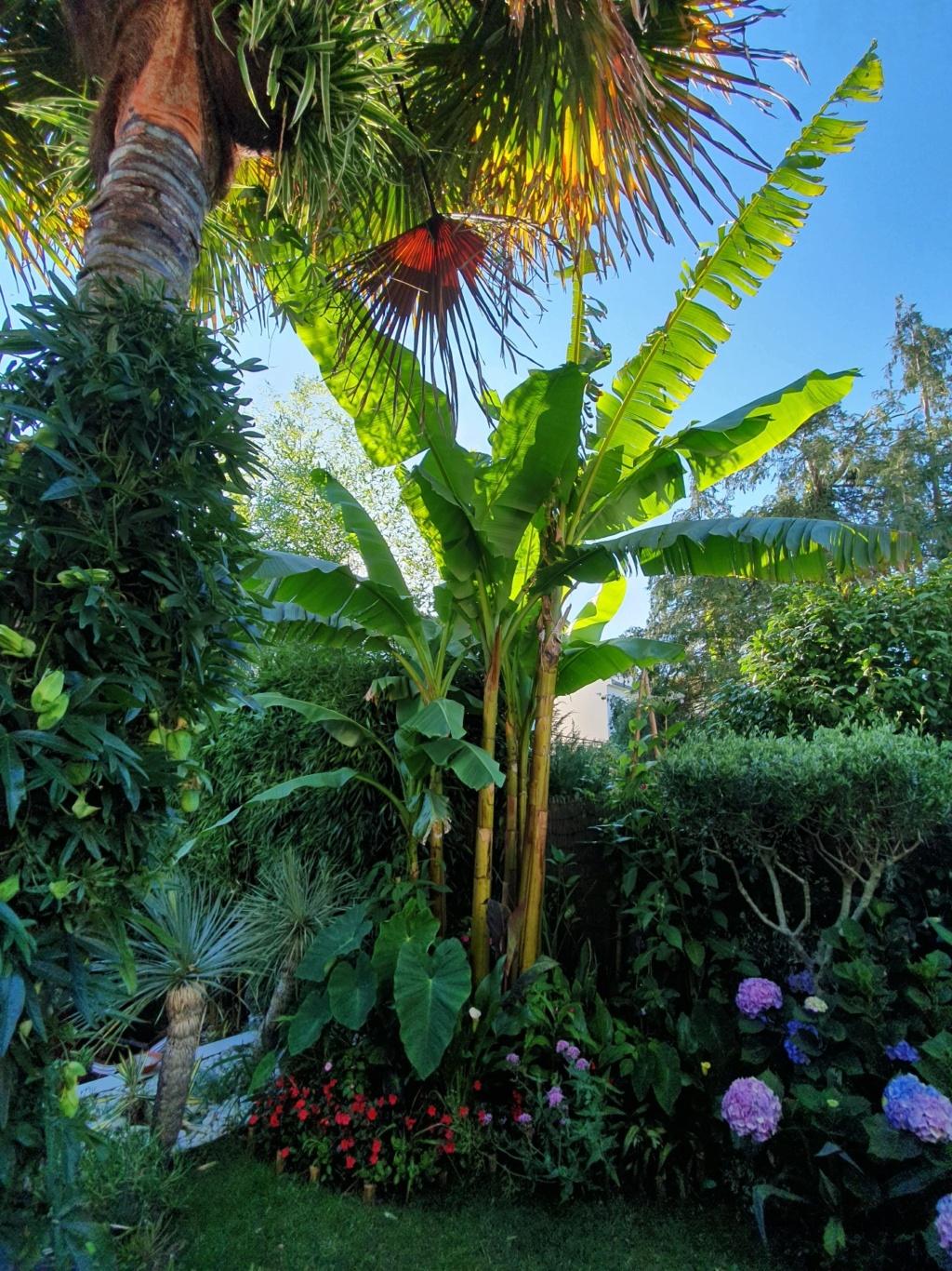 Rémi - Mon (tout) petit jardin en mode tropical - Page 14 20190812