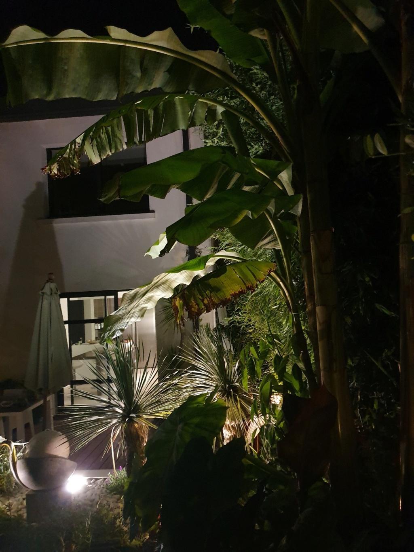 Mon (tout) petit jardin en mode tropical - Page 14 20190832