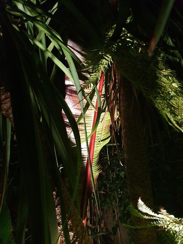 Rémi - Mon (tout) petit jardin en mode tropical - Page 14 20190834