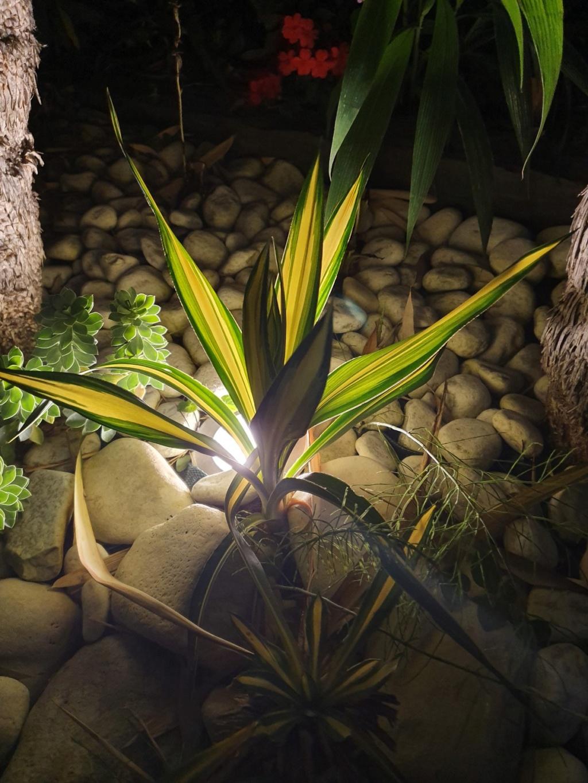 Mon (tout) petit jardin en mode tropical - Page 14 20190835