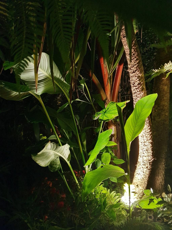 Rémi - Mon (tout) petit jardin en mode tropical - Page 14 20190836