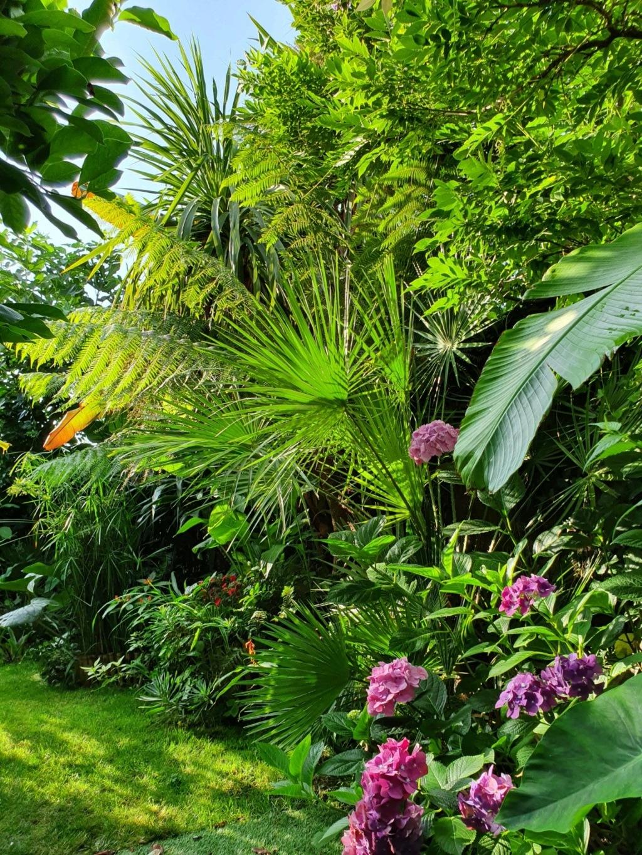 Rémi - Mon (tout) petit jardin en mode tropical - Page 14 20190844